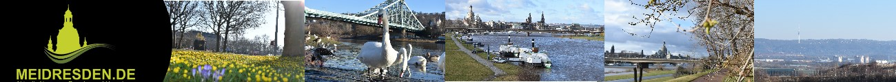 Header MeiDresden.de